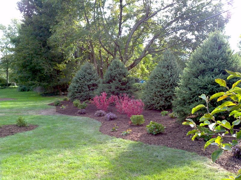 Image of trees and flowers (landscape plantings) by Graf's Lawn & Landscaping LLC